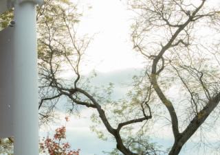 Sage/Spring