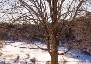 Winter Lookout