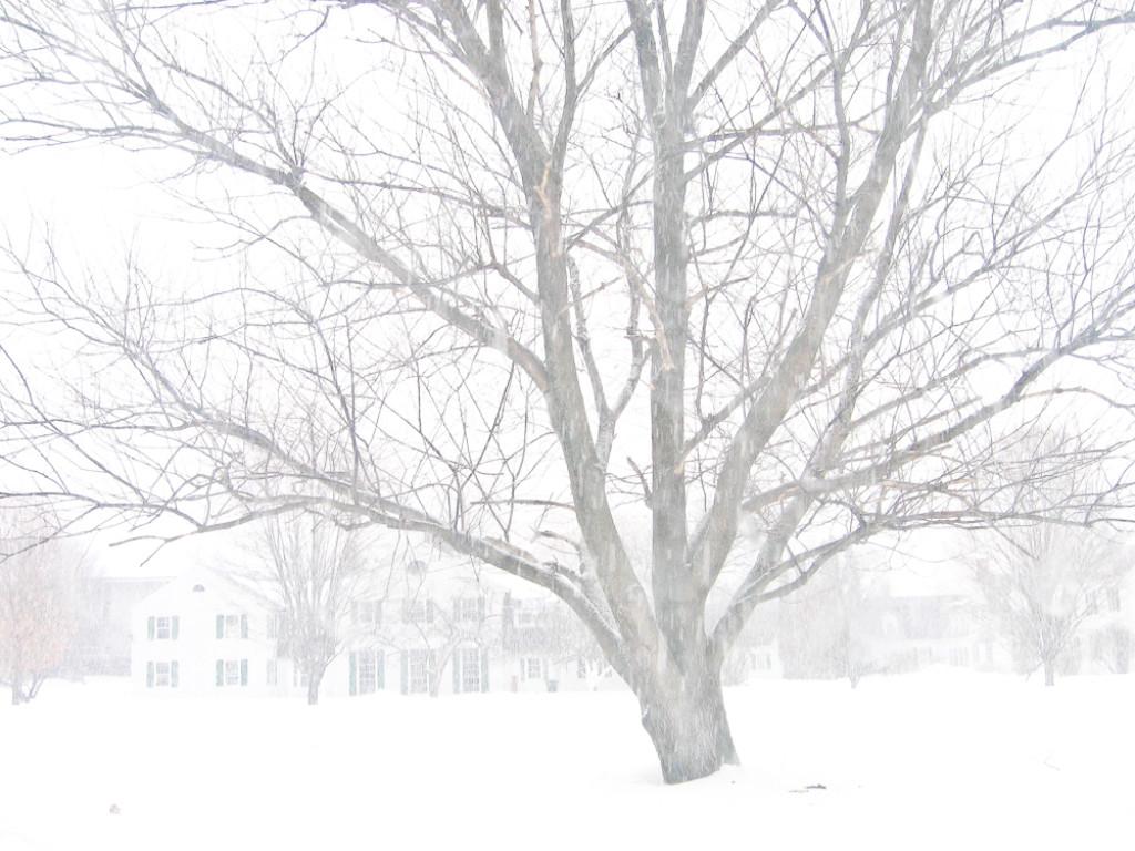 The White Dream