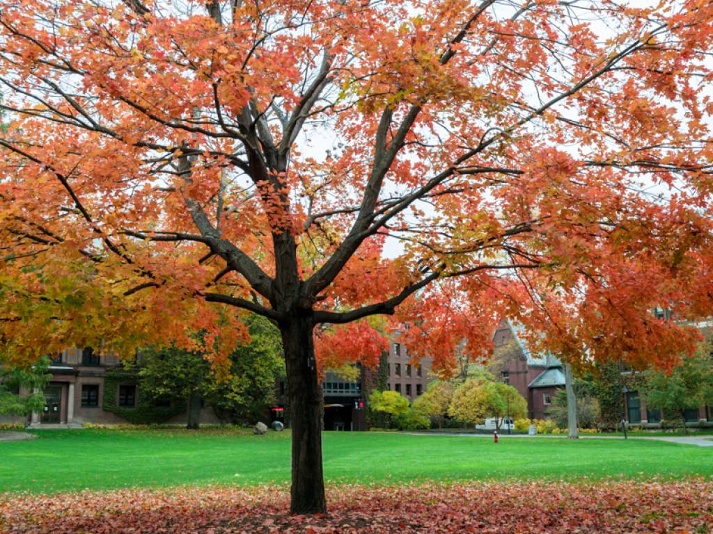 Smith Autumn